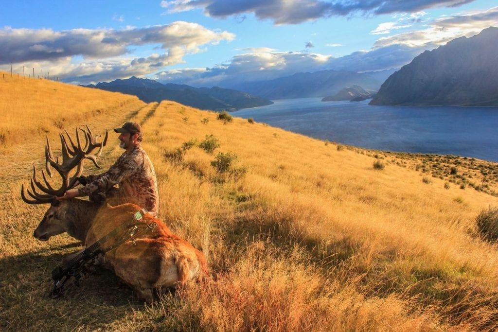 Matt took this incredible Gold Medal Red Stag on the South Island of New Zealand
