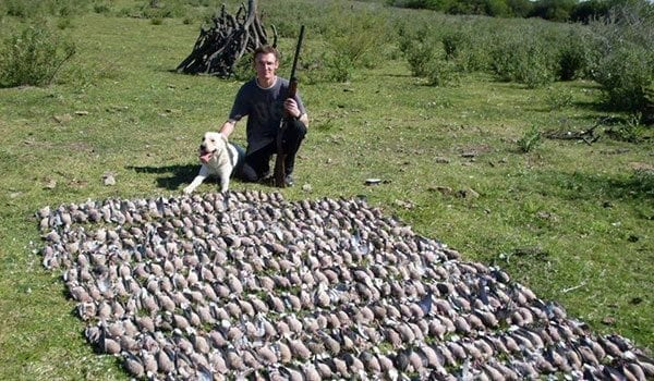 Argentina Ducks, Doves, and Partridge