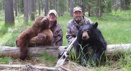 Double Black Bears
