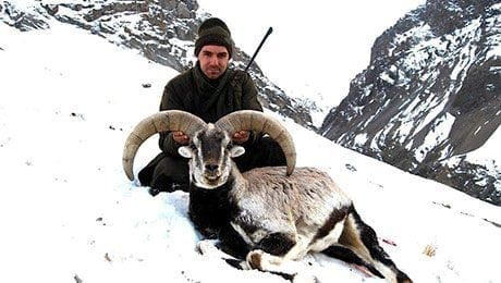 Nepal Blue Sheep Hunt