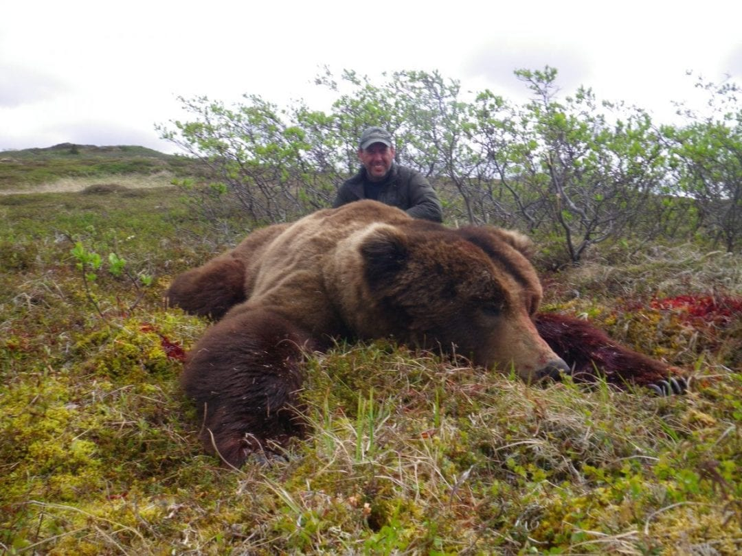 Alaskan Range Brown Bear Spring Hunt