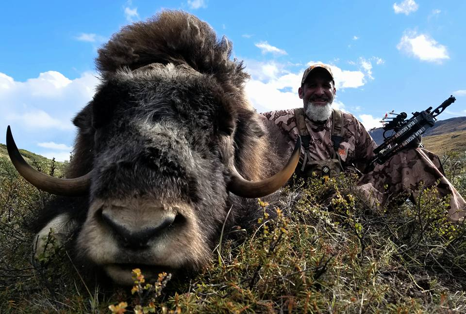 Matt with his beautiful muskox taken with his bow