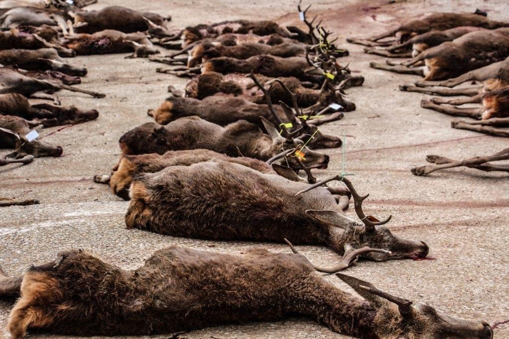 The animals of the Spanish Monteria