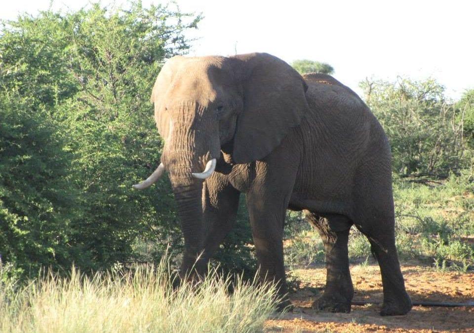 South Africa Elephant Hunt