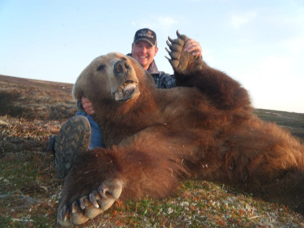 Giant Brown Bear