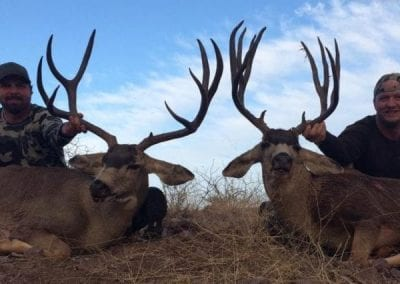 Mexico Mule Deer Hunt