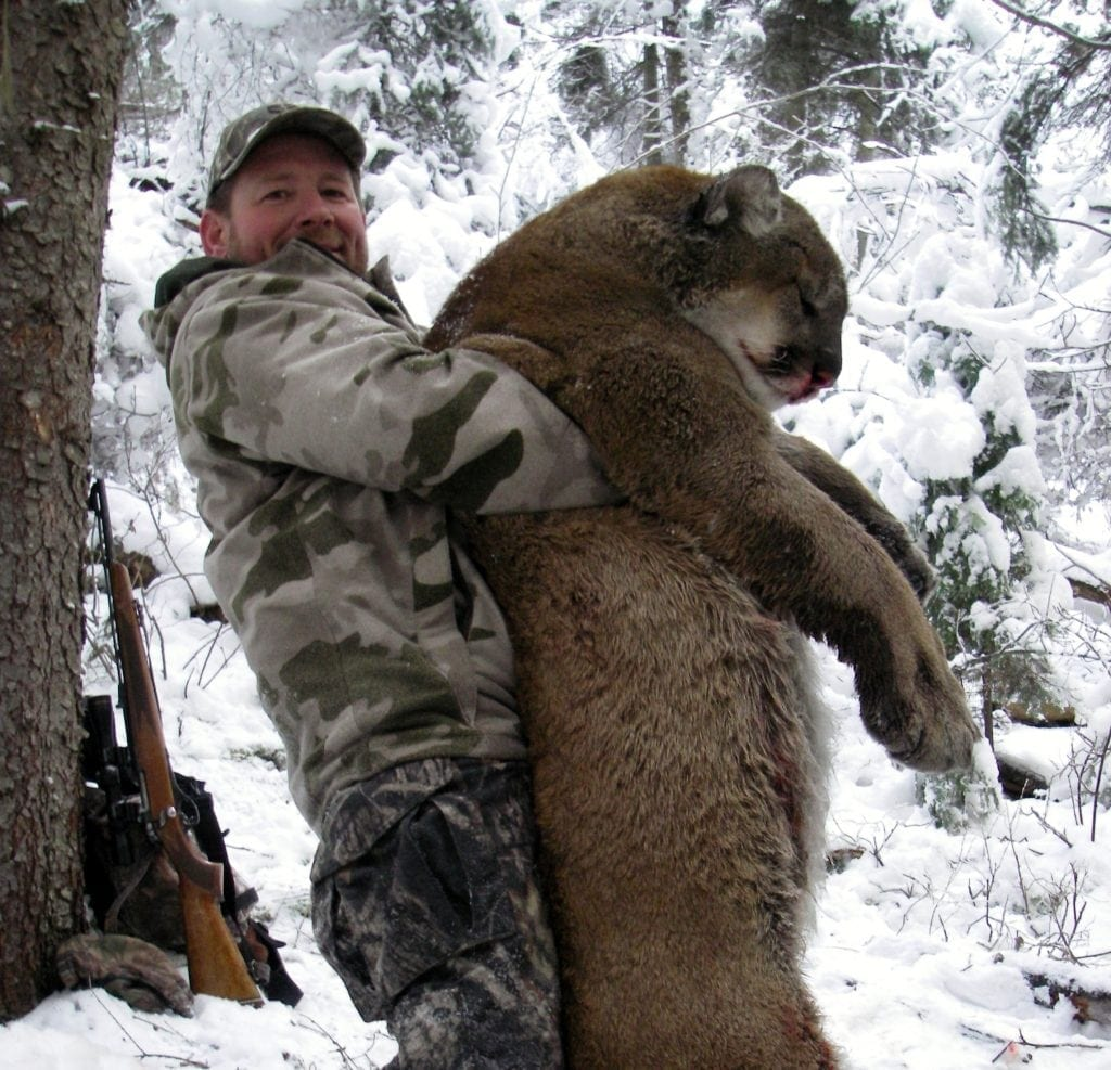 Big Mountain Lion in Idaho
